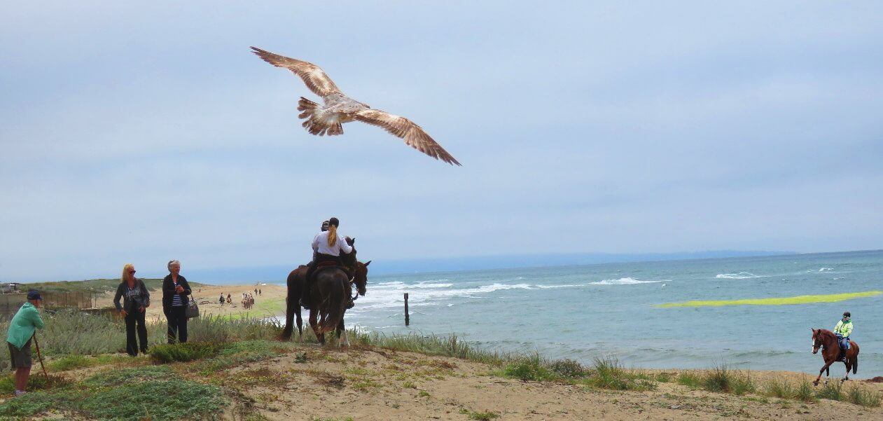 where_to_horseback_ride_in_san_francisco_bay_area