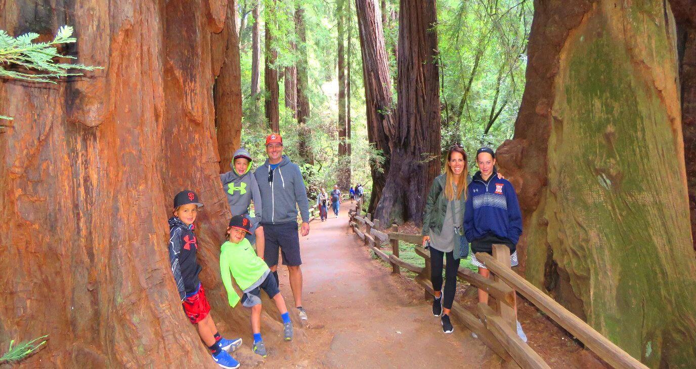 导游参观旧金山附近的红杉大红木树木林国家公园