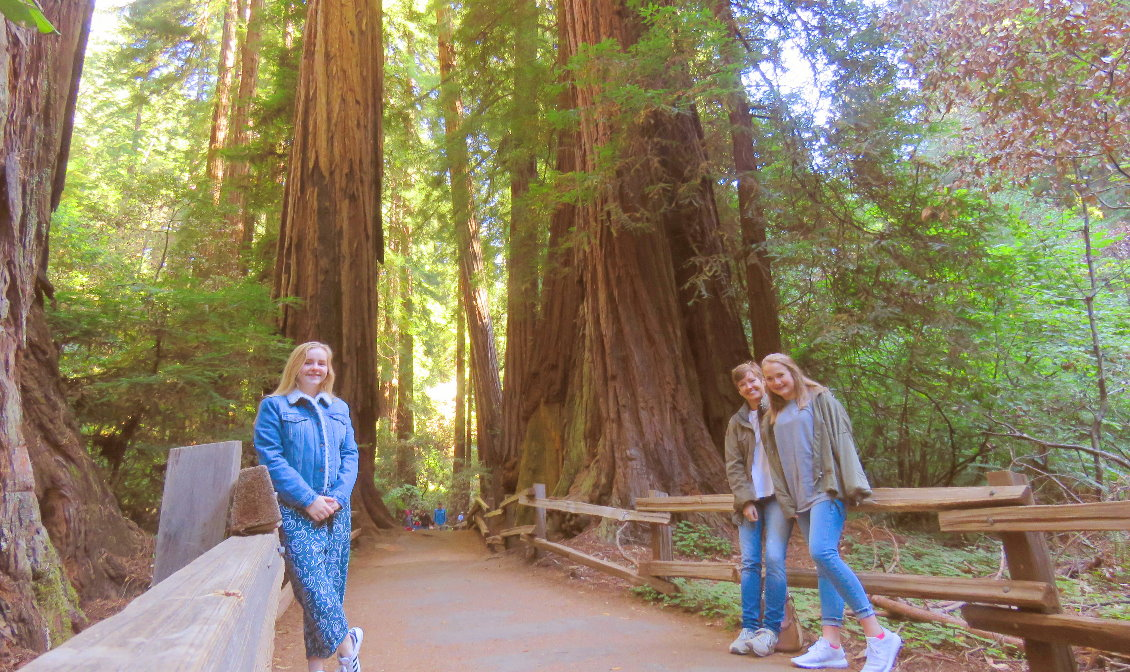 Day custom tours to Muir Woods national forst of giant redwoods and sausalito
