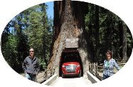 Drive-Thru sequoias redwoods tree in redwood national park tours