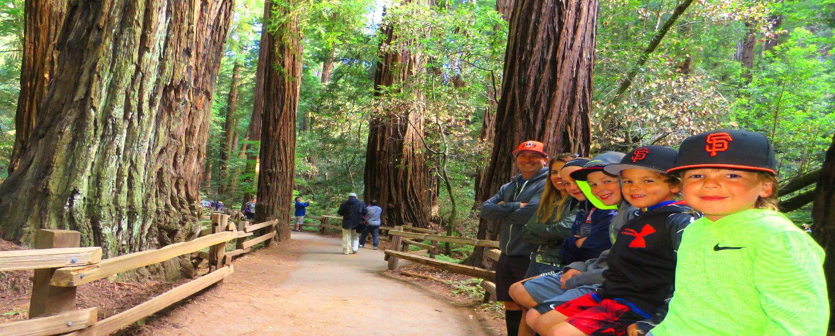 Muir Woods  Park Giant Redwood Trees  Private Custom Tour from San Francisco