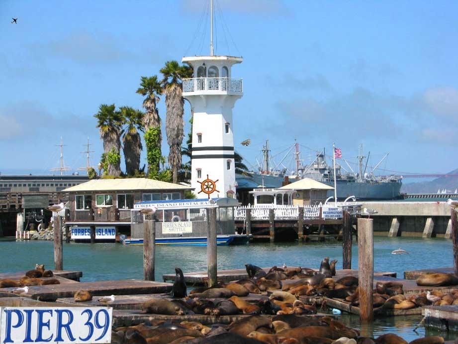 Pier--Marina-fishermans-wharf-Seals-sea-lions-San-Francisco--