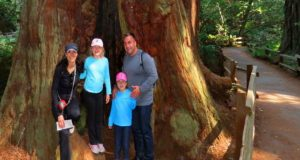 Redwood park of sequoias