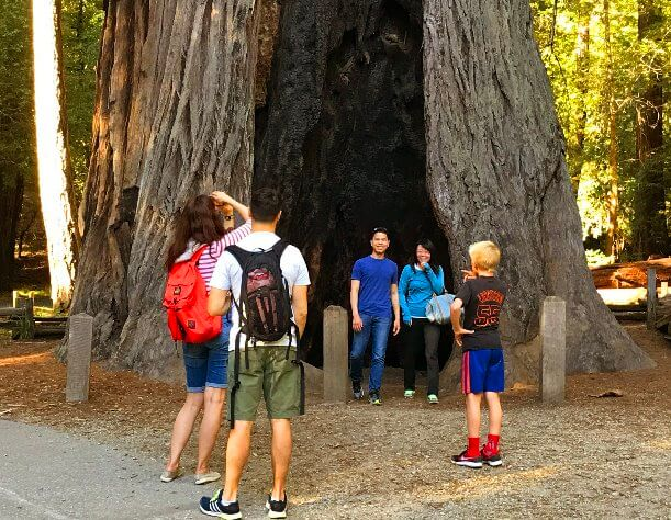Visit a national park of giant redwoods in California