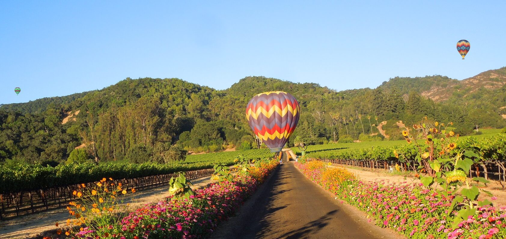 best-napa-valley-hot-air-balloon-ride-with-champagne+brunch