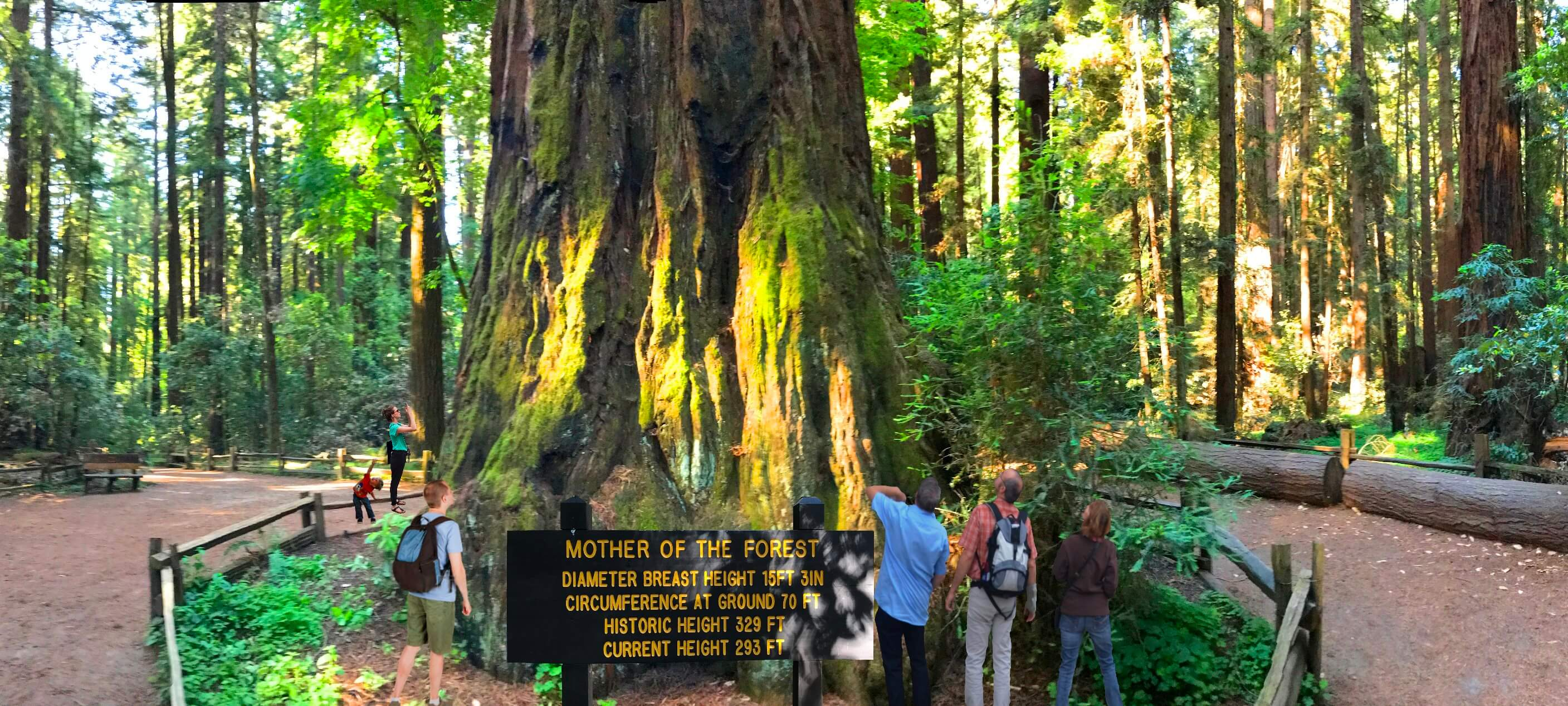 big_basin_giant_redwood_big_sequoias_trees_tour_from_san_francisco