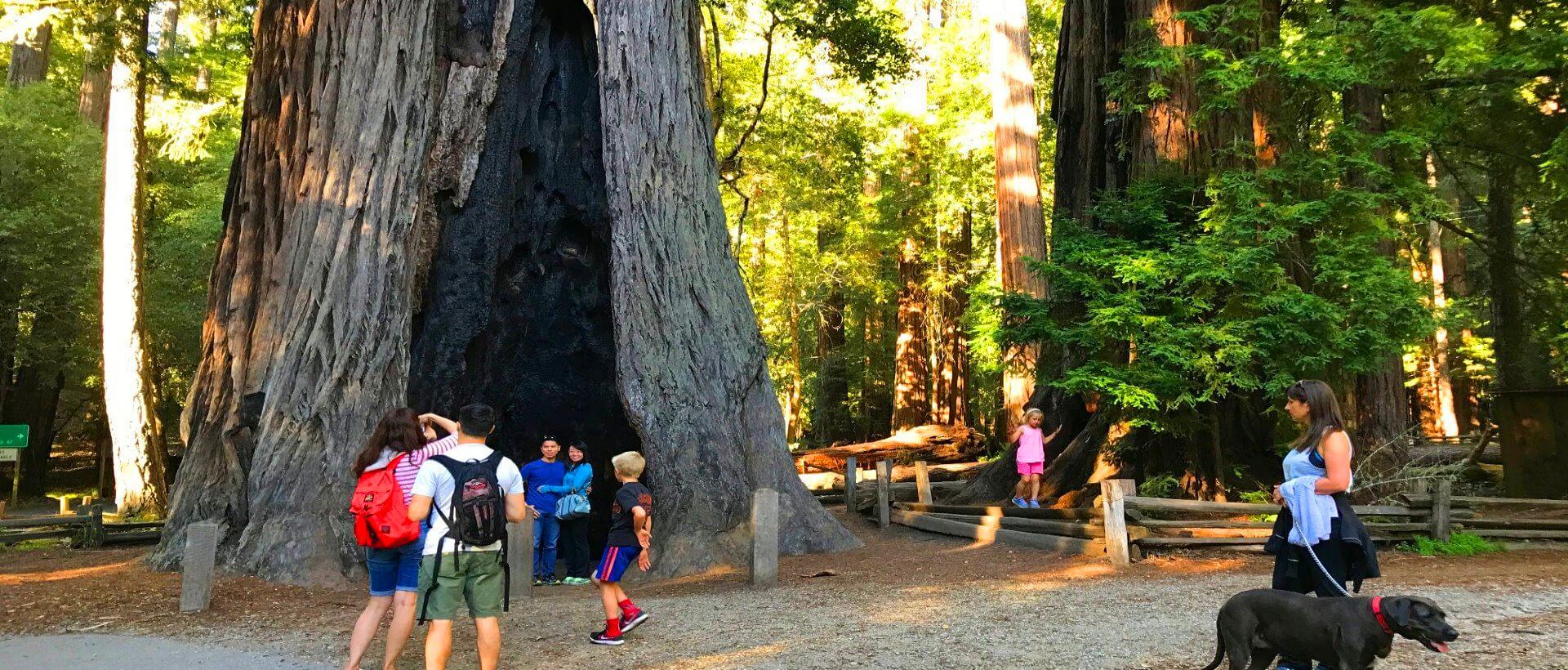 big_basin_redwoods_state_park_and_ssanta_cruz_tour_from_san_francisco