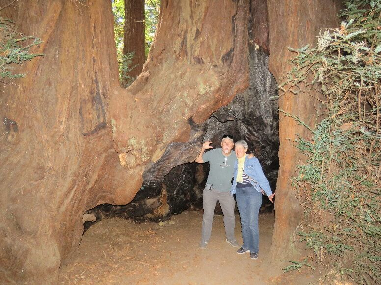 big_basin_redwoods_state_park_day_trip_what_to_do_and_see