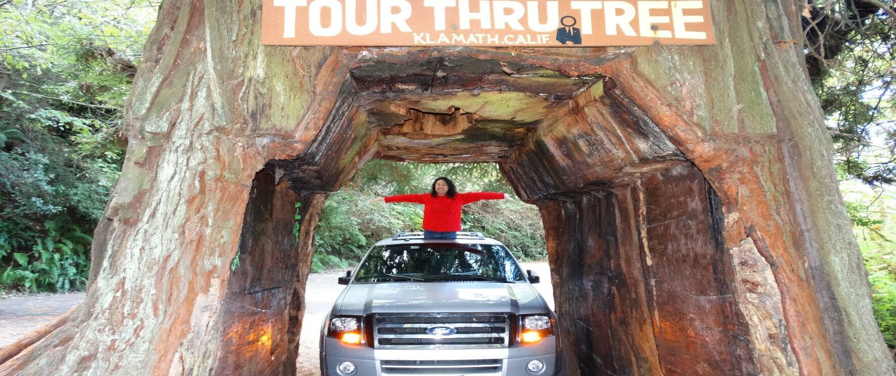 drive-through-tree-redwood-national-park