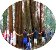group bus charter tours to  muir woods redwoods