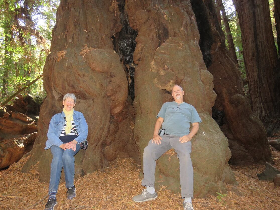 henry_cowell_redwoods_state_park_tour_from_silicon_valley