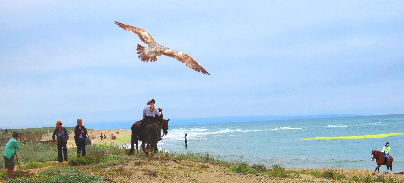 horseback-tour-on-the-beach-near-san-francisco-bay-area