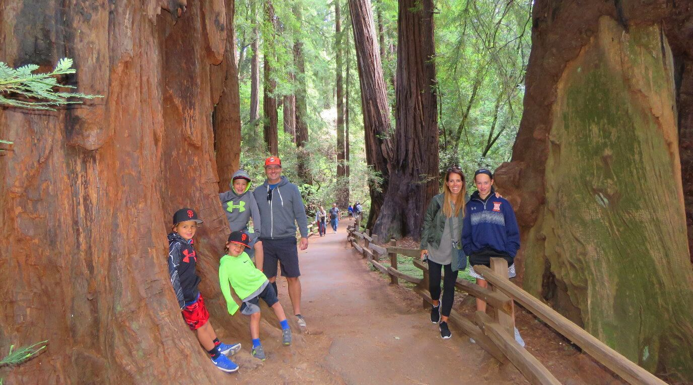 muir_woods_wine_tour_napa_or_sonoma_valley