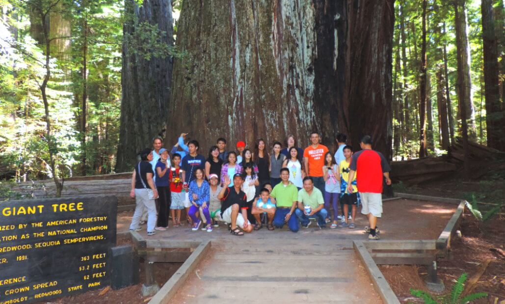 must-see-places-in-northern-california-oregon-tours-ave-giant-redwoods