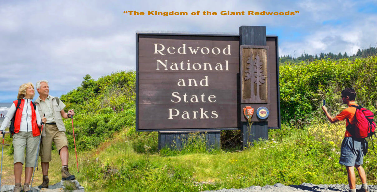 plan-your-visit-redwood-national-san-francisco-vacation-deals