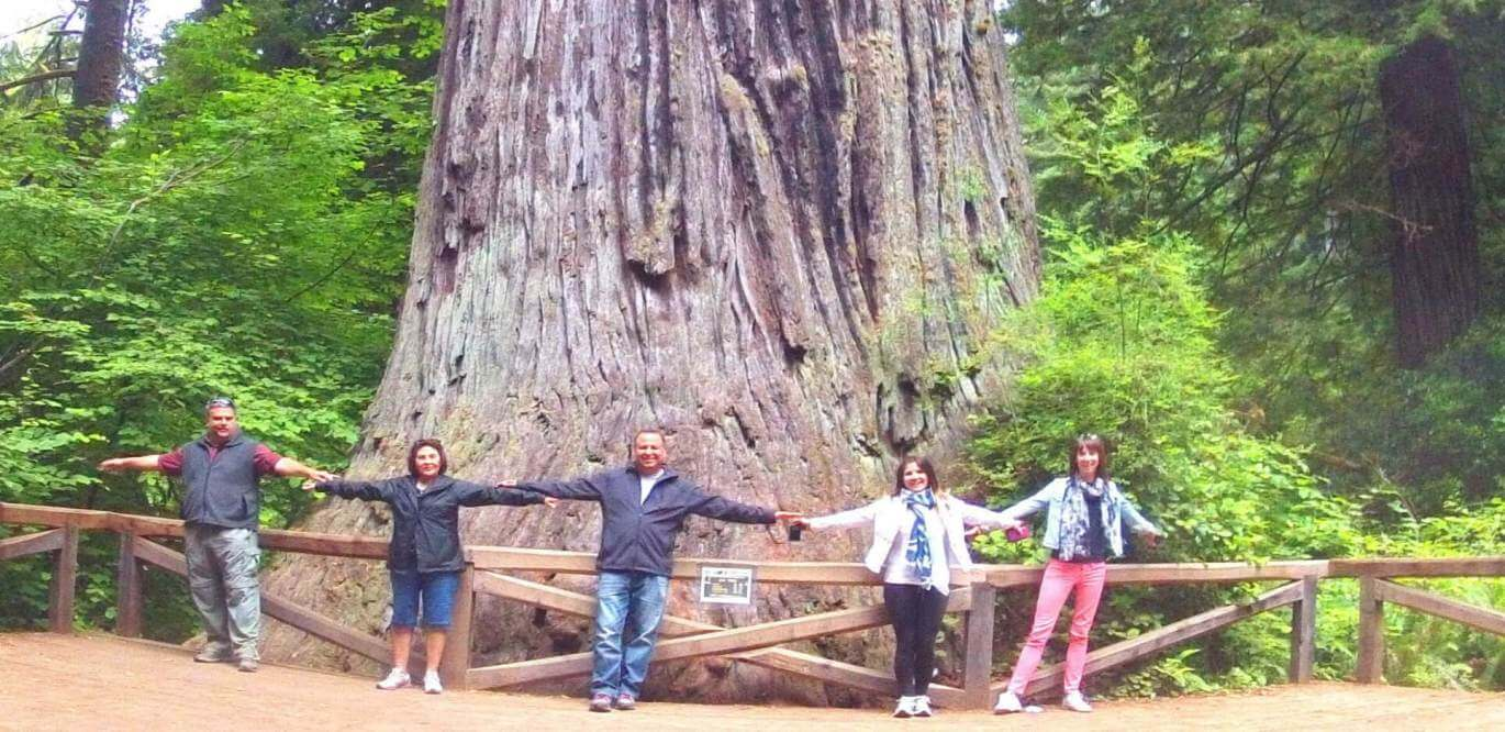 redwood-national-park-giant-trees-sequoia-national-park