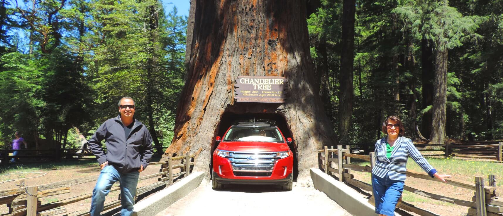 redwood-national-park-must-see-places-redwoods