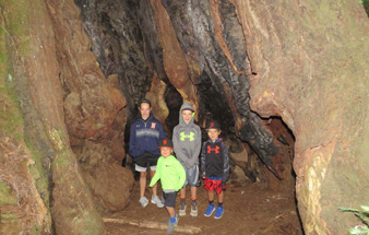 redwood_giant_trees_muir_woods_sequoias_trip_small
