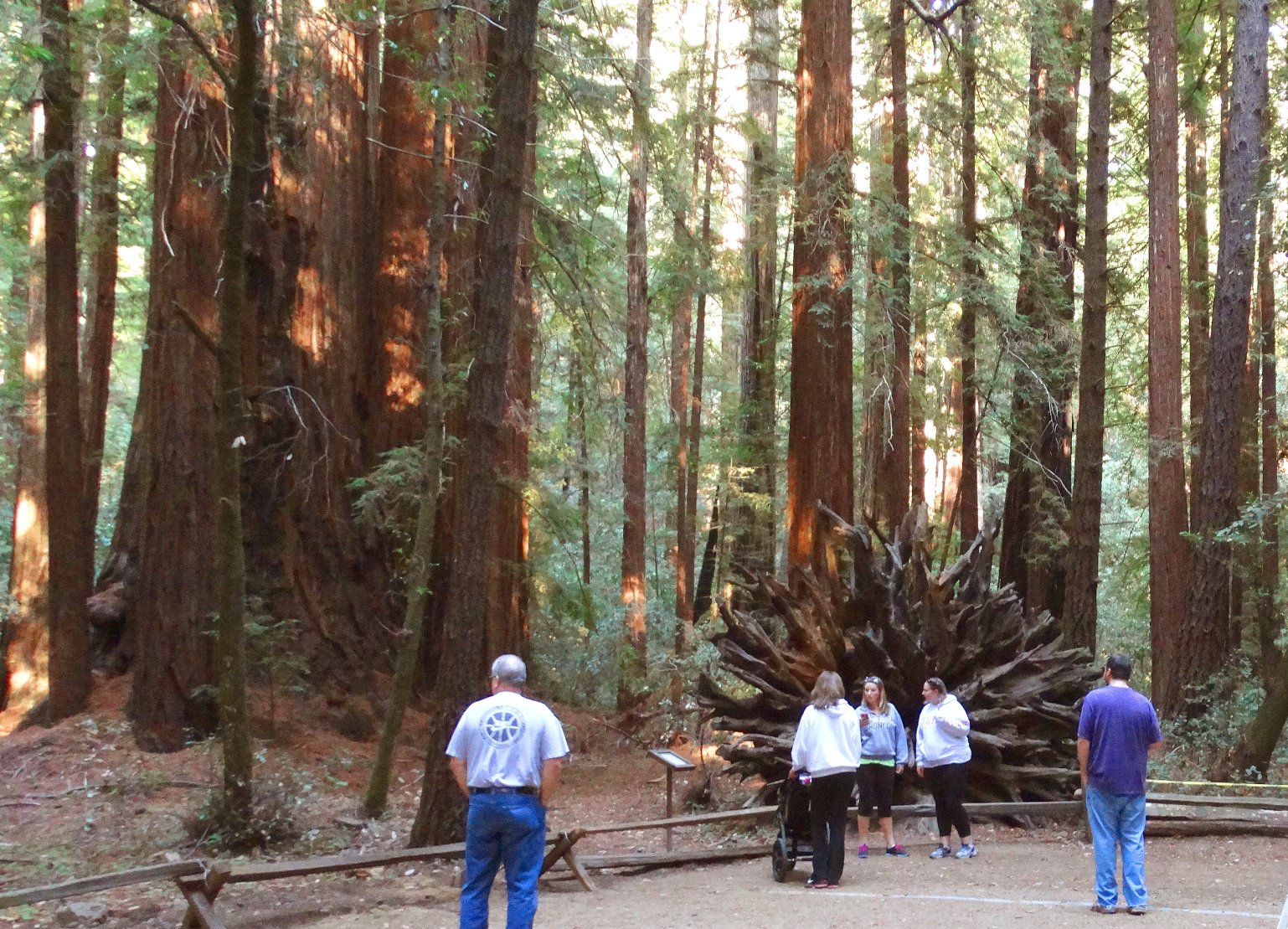 redwoods-and-wine-_country-_tours-muirwoods
