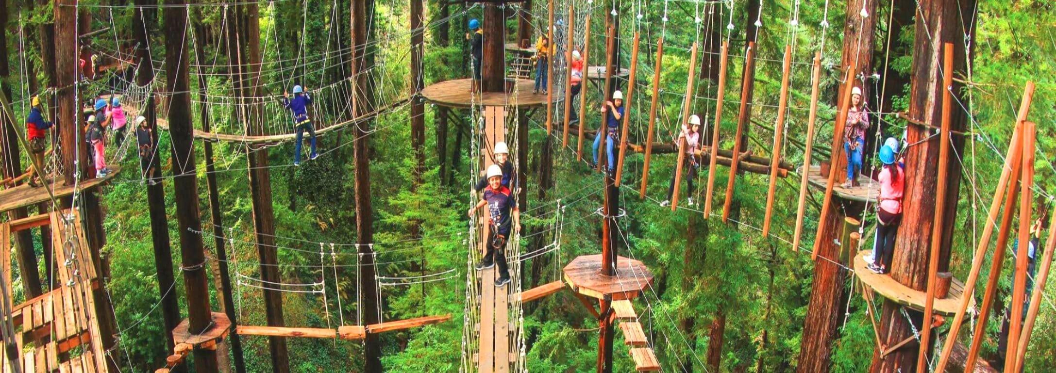 redwoods-canopy-tours-and-zipline-adventure-giant-rredwoods