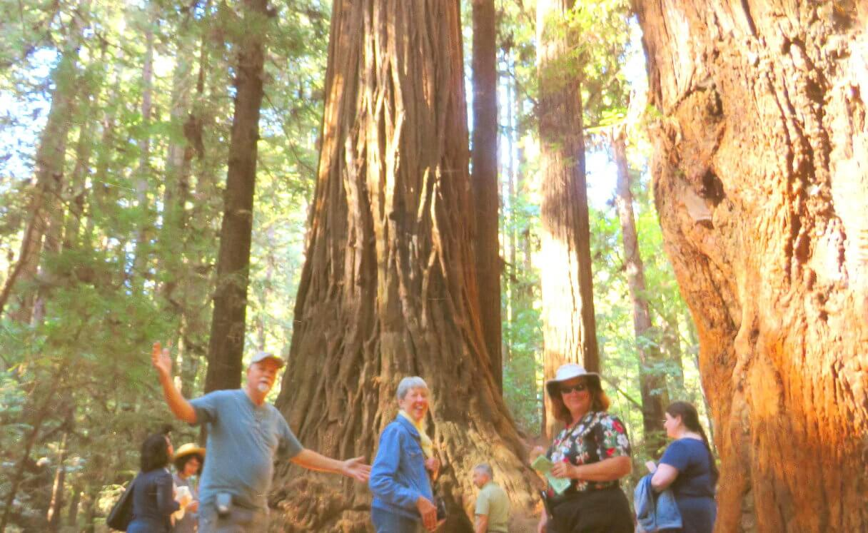 redwoods_park_tours_from_silicon_valley