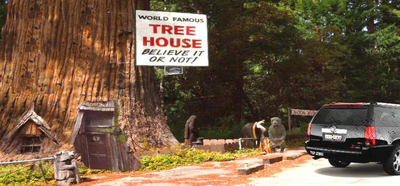 ripley-believe-it-or-not-world-famous-tree-house-giant-redwoods
