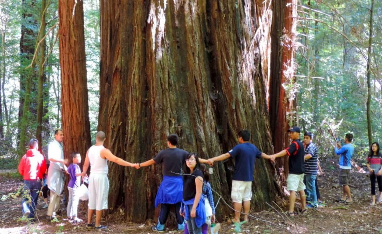 rockefeller_loop_trail_in_humboldt_redwoods_state_park