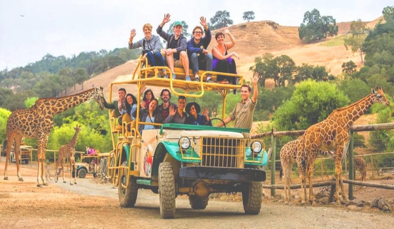 safari_park_jeep_tour_&_wine