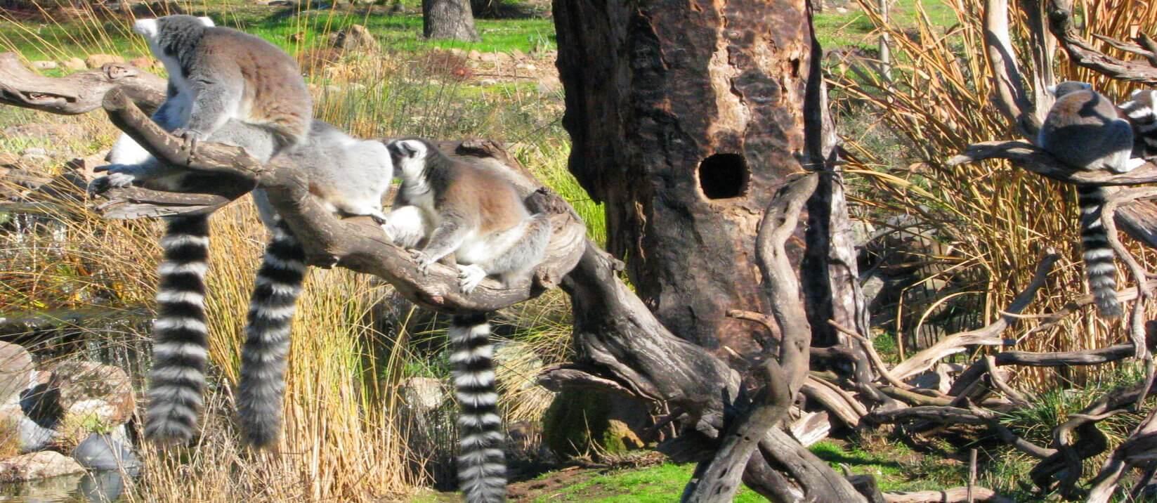 safari_wild_animal_park_tour_and_redwoods