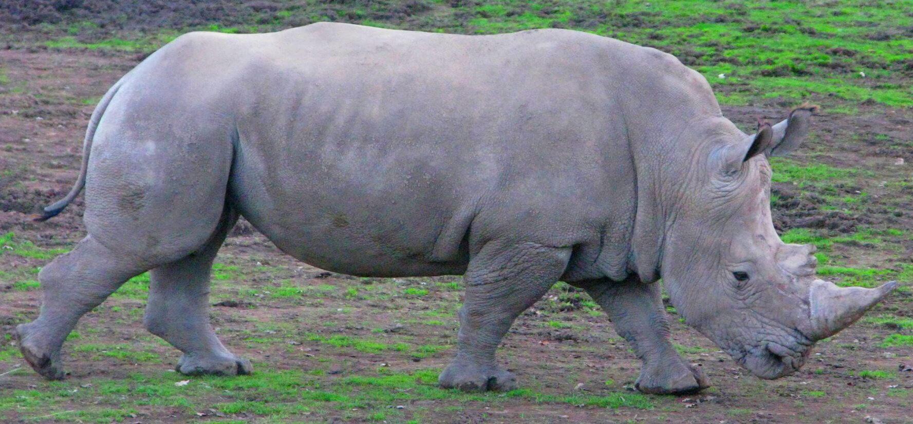 san_francisco_safari_wild_animal_park_+_zoo_tour
