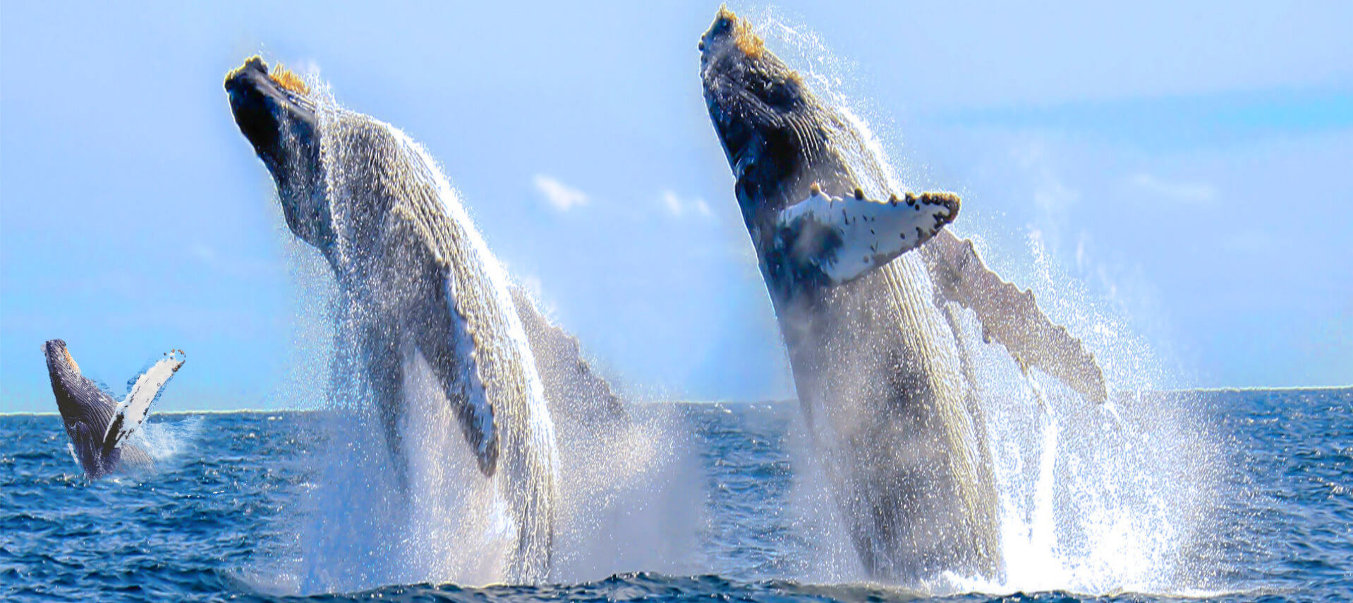 san_francisco_whale_tour_monterey_bay_attractions