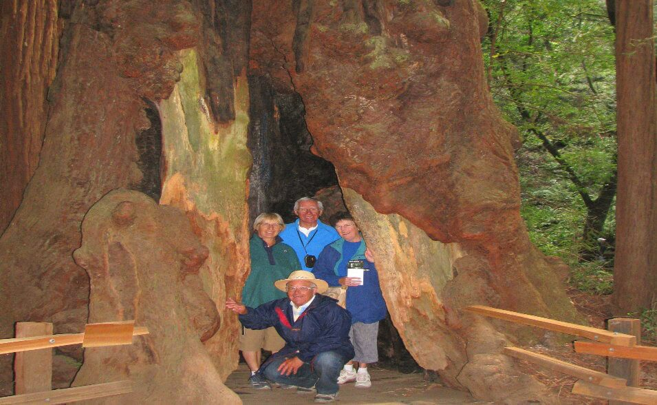 visit_muir_woods_park_of_coastal_redwoods_giant_sequoias_ancient_trees_walking_tour_redwood_park