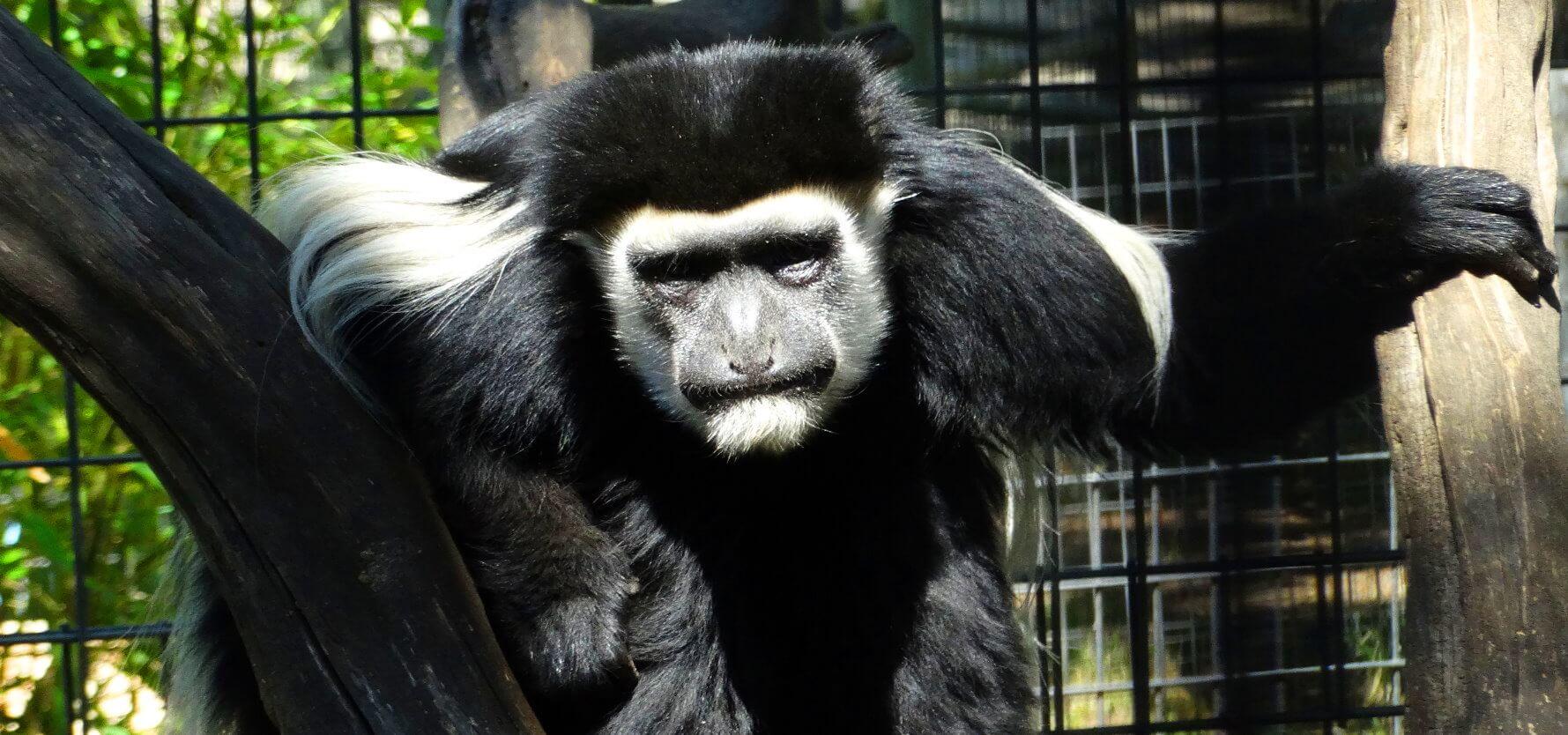 visit_safari_wild_animal_park_kids_friendly_adventures