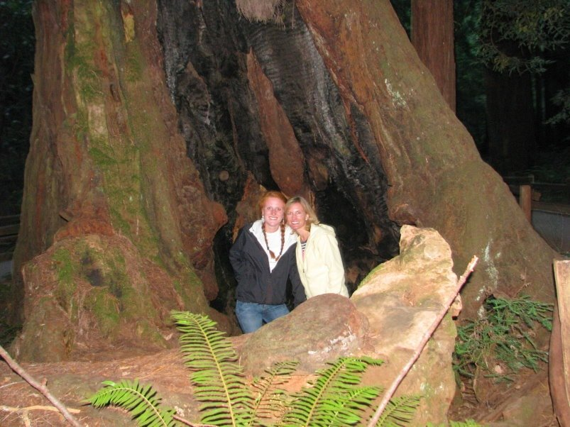 visitors-inside-a-Giant-Redwood-Tree-at-Muir-Woods-forest--